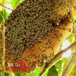 mật ong khoái nguyên chất